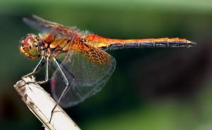 Θηλυκά έντομα... κάνουν τα ψόφια για να αποφύγουν τα αρσενικά!