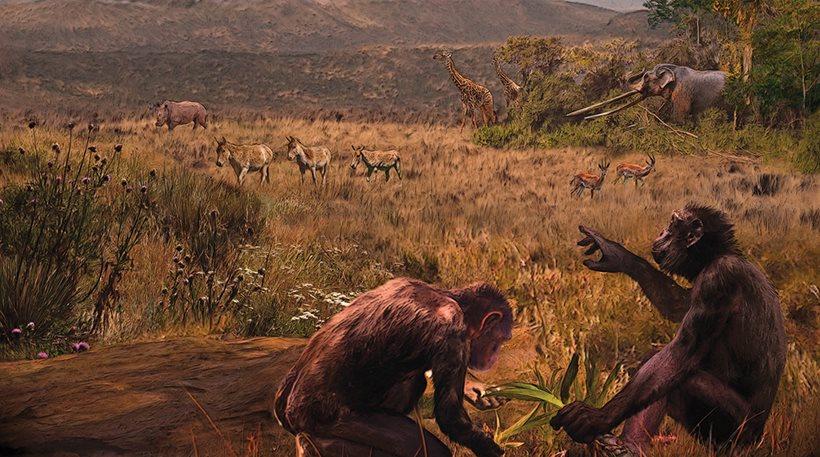 perierga.gr - Ήταν Έλληνας ο πρώτος άνθρωπος; Γκρεκοπίθηκος, 7,2 εκατ. ετών!