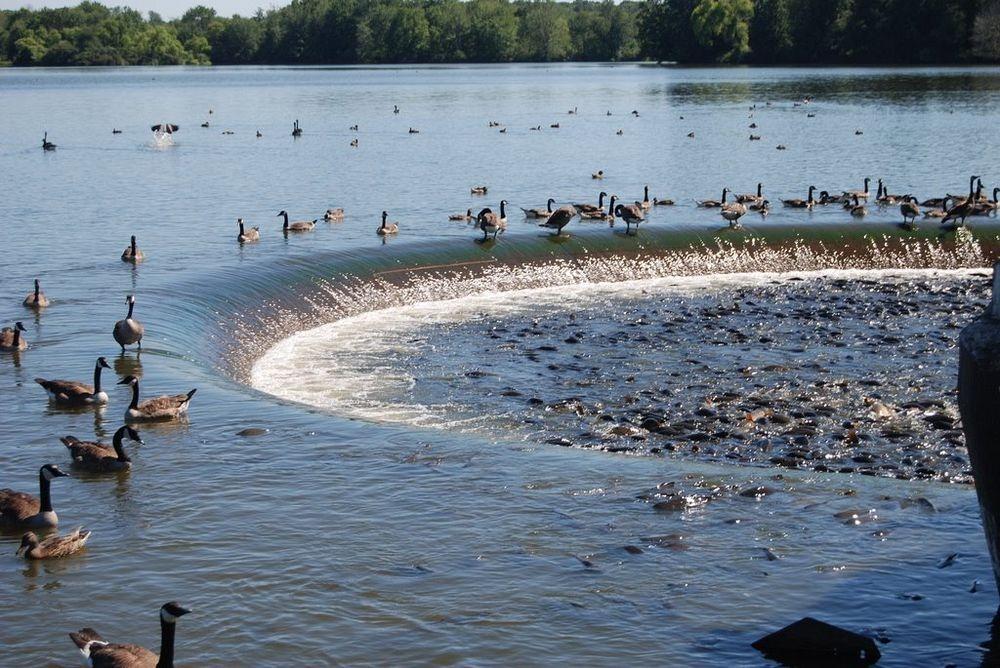perierga.gr - Linesville Spillway: Εκεί που οι πάπιες περπατούν πάνω στα ψάρια!