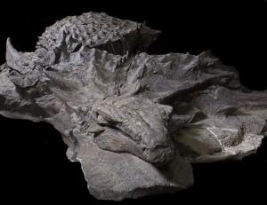 Ανακαλύφθηκε το σημαντικότερο εύρημα δεινοσαύρου!
