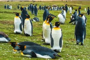 10 είδη υπέροχων πιγκουίνων!