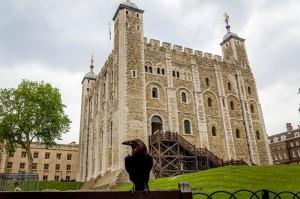 Τα κοράκια στον Πύργο του Λονδίνου ζουν... βασιλικά!