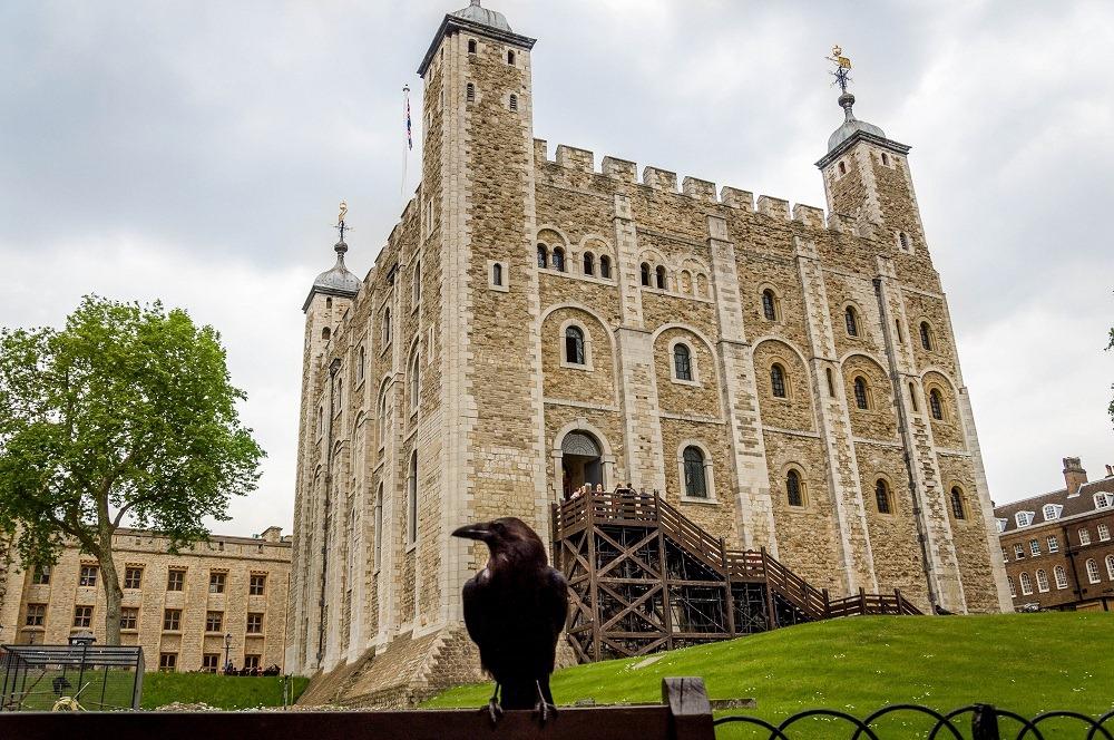 perierga.gr - Τα κοράκια στον Πύργο του Λονδίνου ζουν βασιλικά!