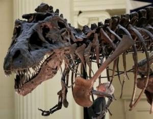 Ο τυραννόσαυρος «δάγκωνε με το βάρος τριών αυτοκινήτων»!