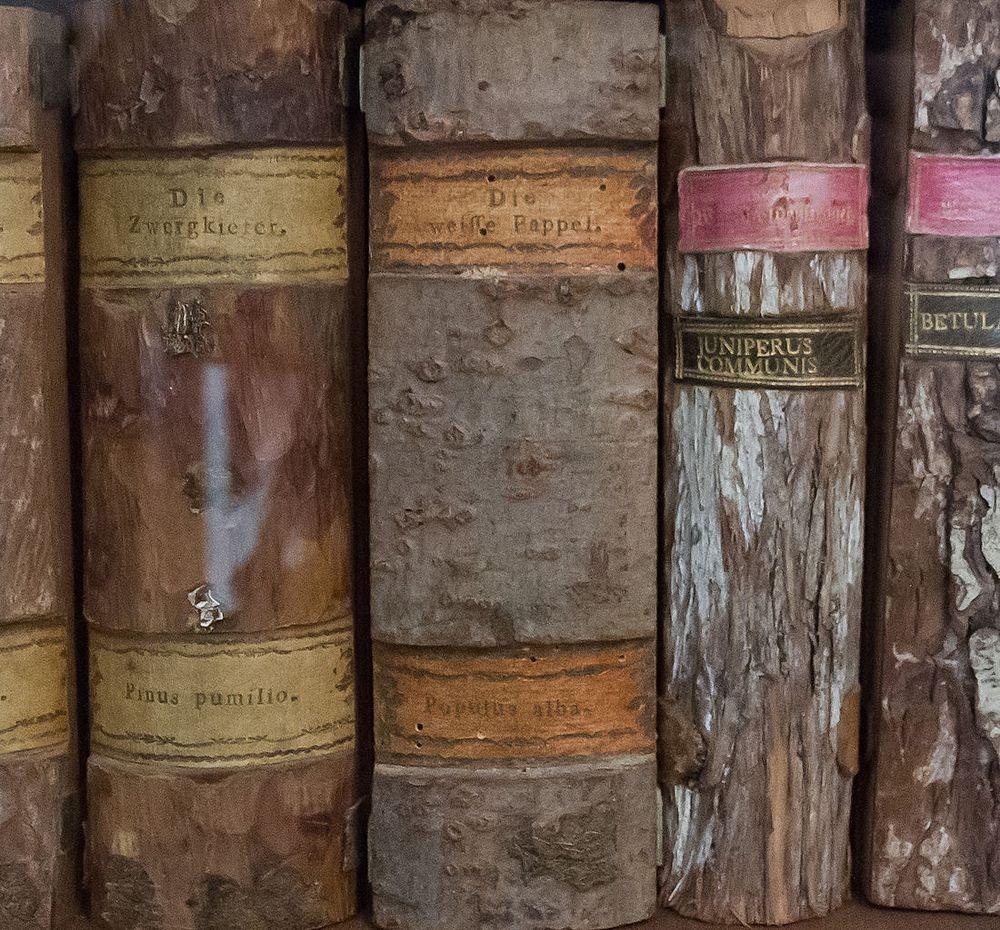 perierga.gr - Xylotheque: Η βιβλιοθήκη των ξύλων!