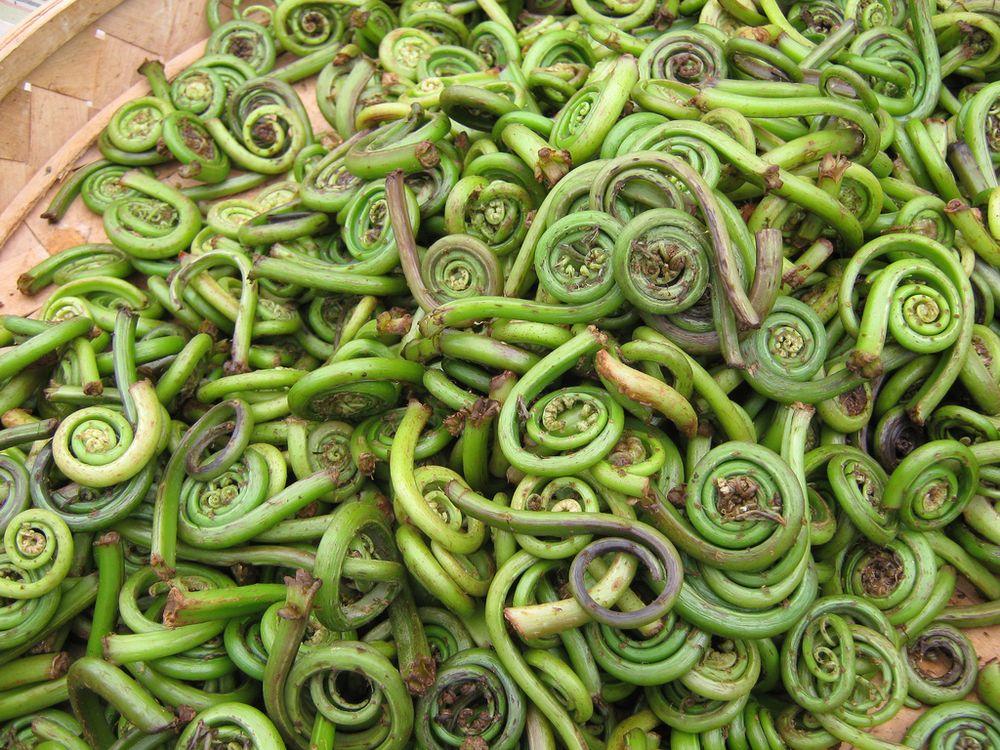 perierga.gr - Λαχανικά που πιθανώς δεν έχετε ξανακούσει ποτέ!