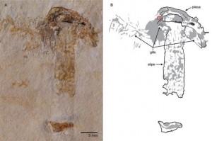 Βρέθηκε μανιτάρι από την εποχή των... δεινοσαύρων!