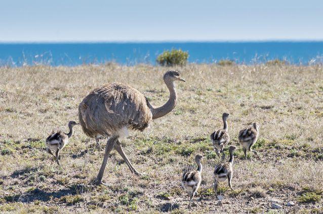 perierga.gr - 10 υπέροχοι μπαμπάδες στο ζωικό βασίλειο