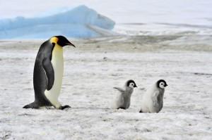 10 υπέροχοι μπαμπάδες στο ζωικό βασίλειο!