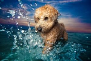 Υπέροχες εικόνες από τον διαγωνισμό για τον Φωτογράφο Σκύλων της Χρονιάς!