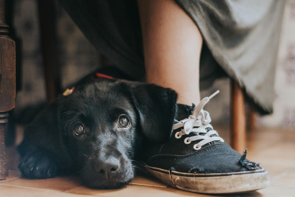 perierga.gr - Υπέροχες εικόνες από τον διαγωνισμό για τον Φωτογράφο Σκύλων της Χρονιάς!