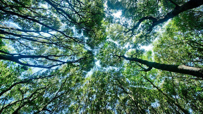 perierga.gr - 18 λόγοι που τα δάση είναι ανεκτίμητα!