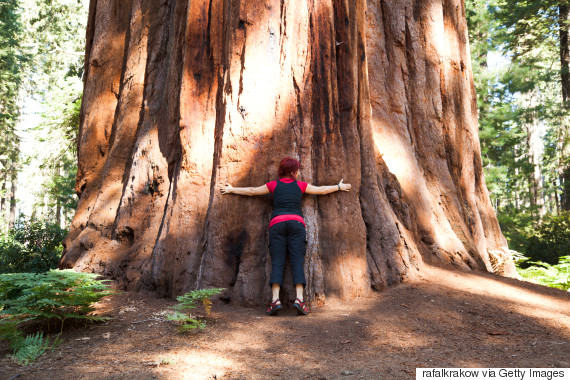 perierga.gr - Πικραμένος γεωπόνος πήρε την τέλεια εκδίκηση για το δέντρο που του έκοψαν!