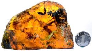 Επιστήμονες ανακάλυψαν νεοσσό 100 εκ. ετών μέσα σε κεχριμπάρι!