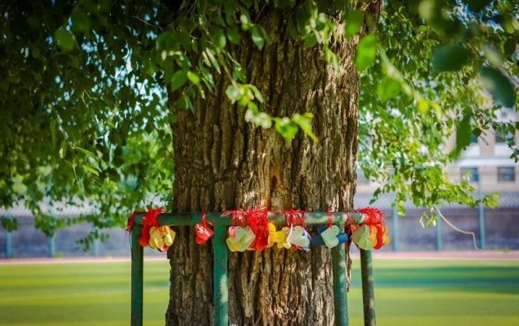 perierga.gr - Δέντρο μεγαλώνει στο κέντρο ποδοσφαιρικού γηπέδου!