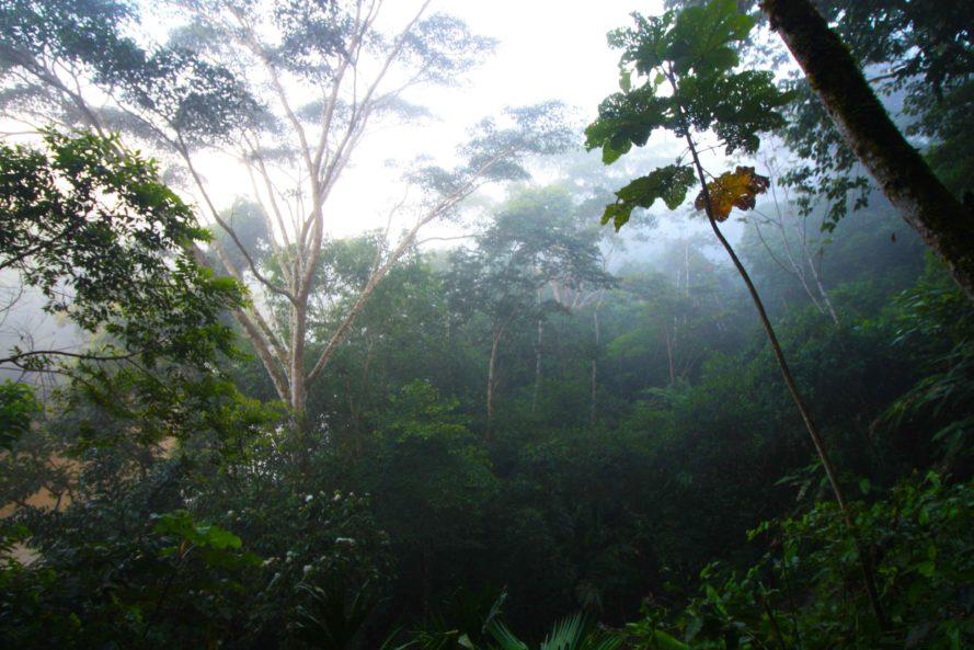 perierga.gr - Το δάσος του Αμαζονίου καθορίζει τη δική του εποχή των βροχών!