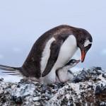 Μαγευτικές φωτογραφίες από τον κόσμο των πτηνών!