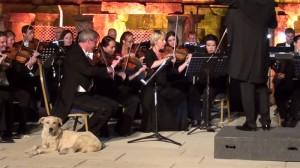 Σκυλί διακόπτει συναυλία κλασικής μουσικής και λαμβάνει την... καλύτερη θέση!