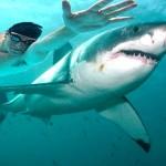 Αντιδράσεις οργής για τη μάχη του Φελπς με... υποτιθέμενο καρχαρία!