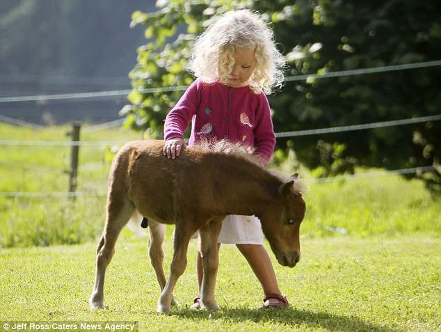 perierga.gr - Το μικρότερο αλογάκι στον κόσμο!