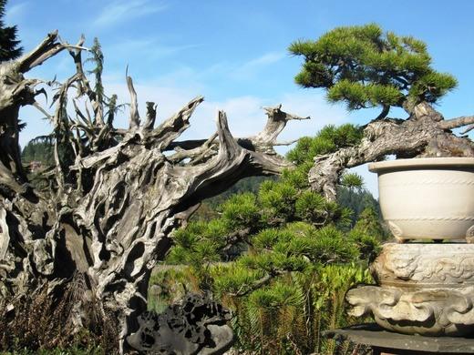 perierga.gr - Κήπος με μπονσάι που έχουν ηλικία πάνω από 1.000 χρόνια!