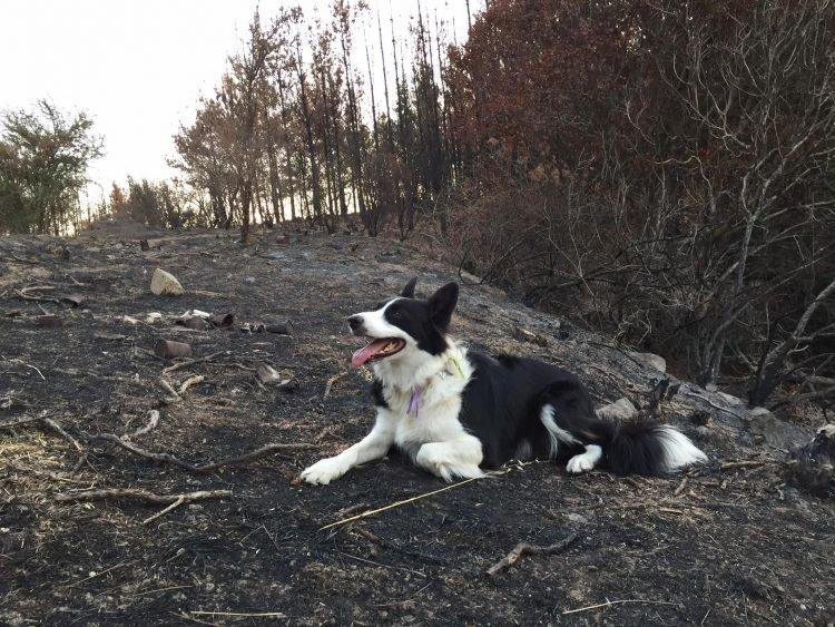 perierga.gr - Σκυλιά κάνουν αναδάσωση σε δάσος!