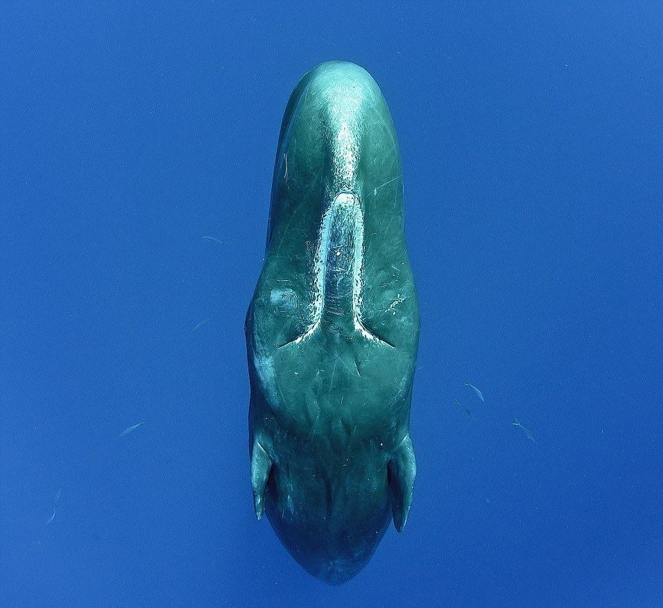 perierga.gr - Η φάλαινα φυσητήρας και ο περίεργος τρόπος που κοιμάται!