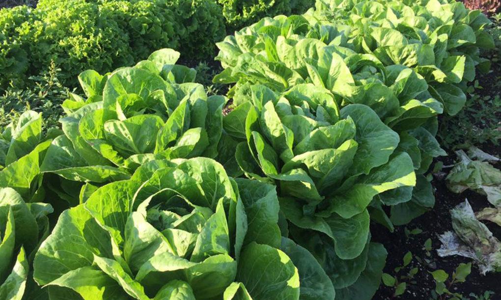 perierga.gr - Σουπερμάρκετ παράγει τα δικά του λαχανικά στην ταράτσα!