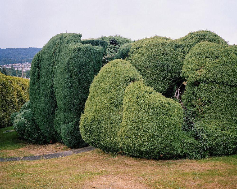 perierga.gr - Σχολαστικά κλαδεμένα δέντρα σε κήπους!
