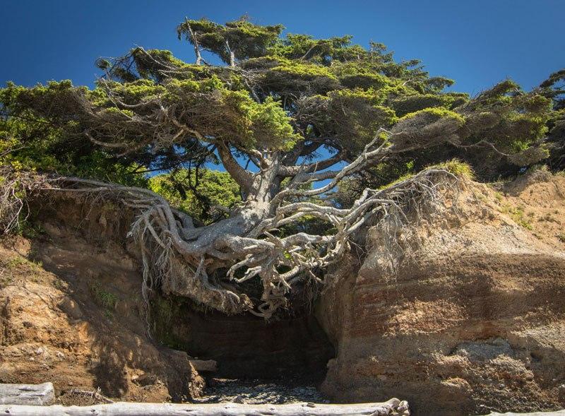 Δέντρα που... αρνήθηκαν να πεθάνουν!