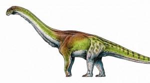 Ο μεγαλύτερος δεινόσαυρος που έζησε ποτέ είχε μήκος 37 μέτρων!