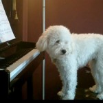 Σκύλος παίζει πιάνο για να... ξεχάσει τη μοναξιά του!