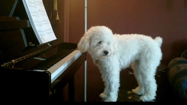 perierga.gr - Σκύλος παίζει πιάνο για να ξεχάσει τη μοναξιά του!