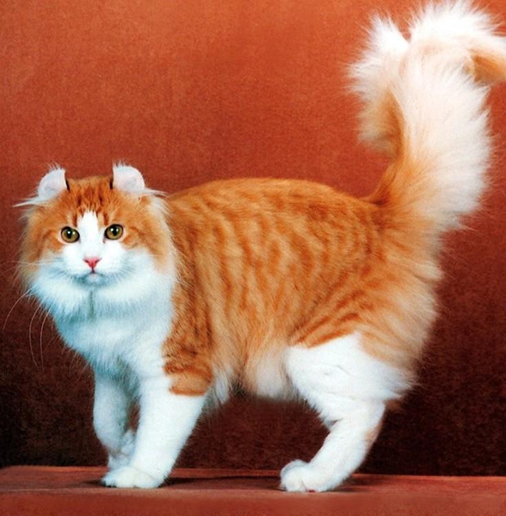 perierga.gr - Οι δέκα πιο ακριβές γάτες του πλανήτη!
