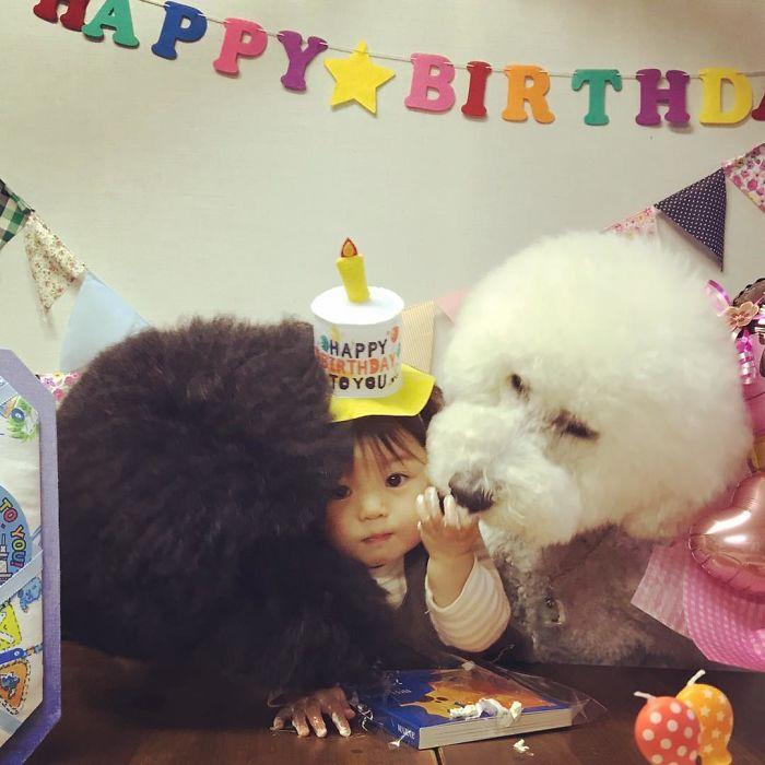 perierga.gr - Μικρή Γιαπωνεζούλα και τα σκυλιά της!