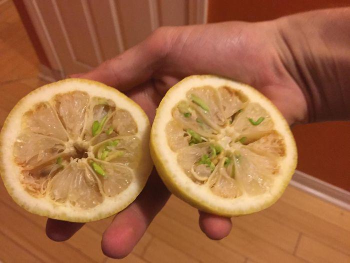 perierga.gr - Παράξενα φρούτα & λαχανικά!