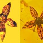Λουλούδια 100 εκ. ετών ανακαλύφθηκαν άριστα διατηρημένα σε κεχριμπάρι!