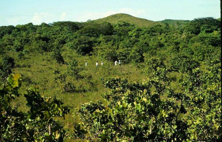 perierga.gr - Πώς οι πεταμένες φλούδες πορτοκαλιών... ανέστησαν ένα δάσος;