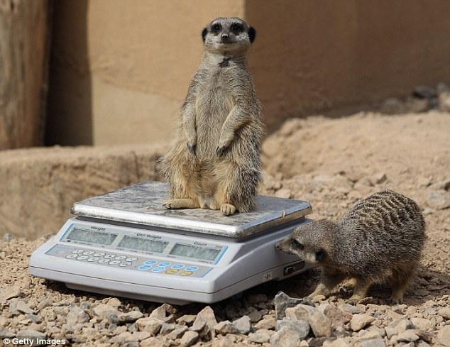 perierga.gr - Πώς ζυγίζουν τα ζώα στους ζωολογικούς κήπους;