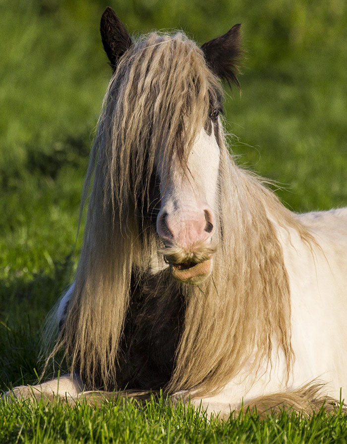 perierga.gr - Κι όμως τα άλογα μπορούν να έχουν... μουστάκι!