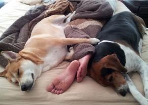Γιατί πρέπει να κοιμόμαστε με τον σκύλο μας;