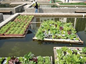 """""""Πλωτοί κήποι"""" σε εγκαταλειμμένο κινεζικό εργοστάσιο!"""