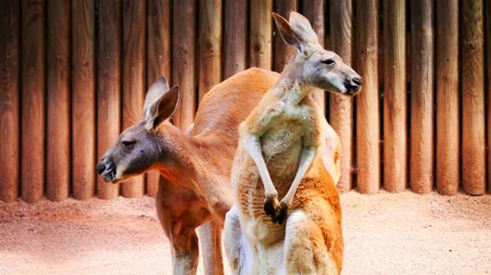 perierga.gr - 15 μεγαλύτερα στο είδος τους ζώα στη γη