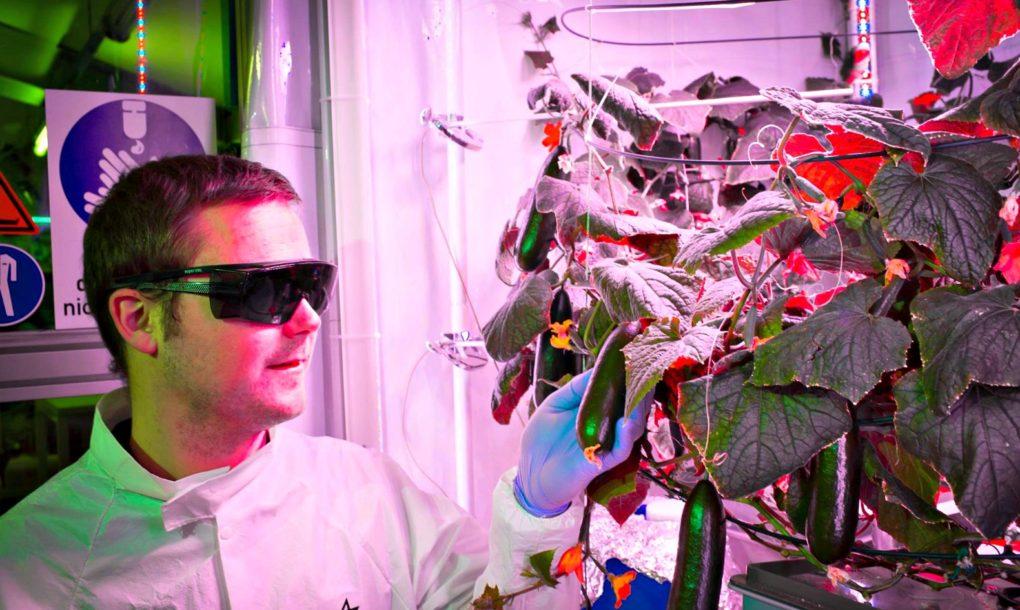 perierga.gr - Θερμοκήπιο στην Ανταρκτική παράγει λαχανικά στους -38 βαθμούς!
