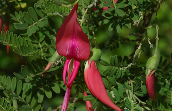 perierga.gr - Υπέροχα και δυσεύρετα είδη που αγαπούν έναν μόνο τόπο...