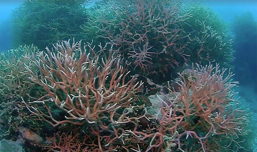 perierga.gr - Φυσικό θαύμα αποκαλύφθηκε στον Μεγάλο Κοραλλιοιγενή Ύφαλο!