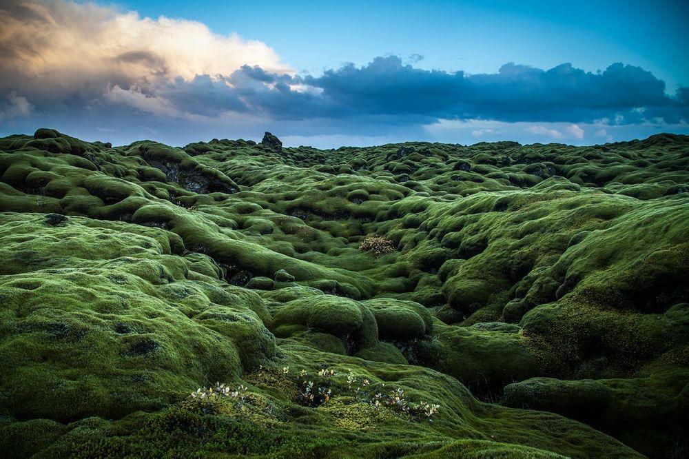 perierga.gr - Τα εντυπωσιακά λιβάδια βρύων της Ισλανδίας!