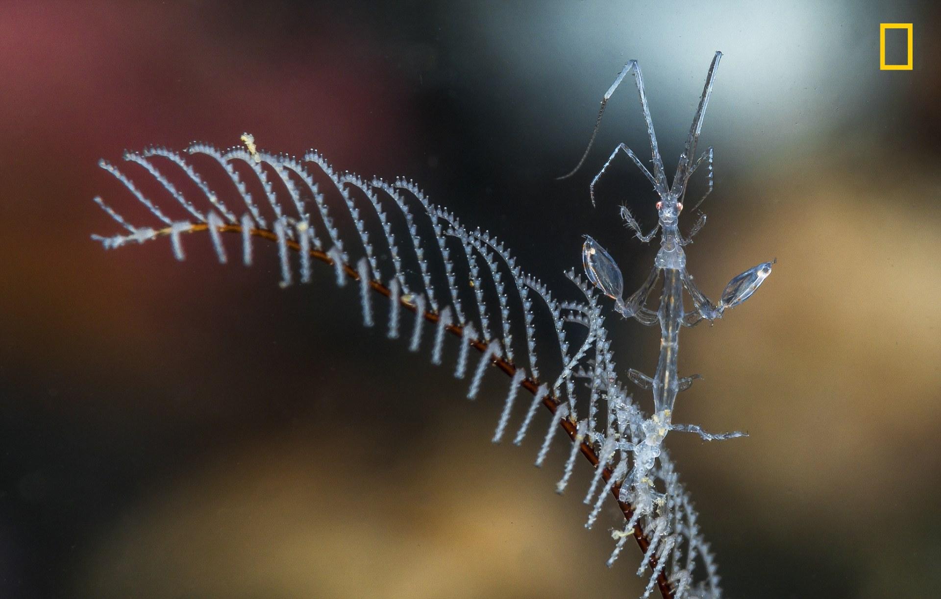 perierga.gr - Το National Geographic παρουσιάζει τις συμμετοχές για τον καλύτερο φωτογράφο φύσης!