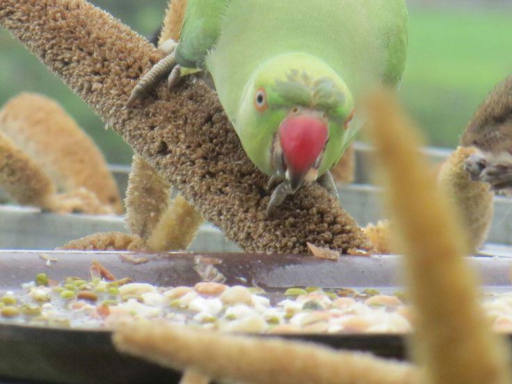 perierga.gr - Ταΐζει 3.000 πουλιά κάθε μέρα για 17 χρόνια