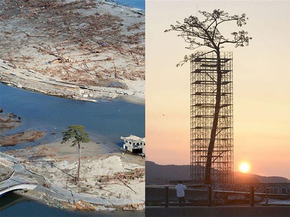 perierga.gr - Δέντρα που σώθηκαν από καταστροφές